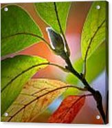 Red Magnolia Leaves With Bud Acrylic Print