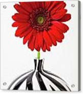 Red Mum In Striped Vase Acrylic Print