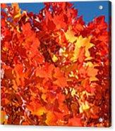 Red Orange Yellow Autumn Leaves Art Prints Vivid Bright Acrylic Print