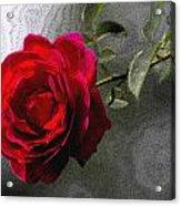 Red Paris Rose Acrylic Print