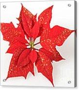 Red Poinsettia Flower Acrylic Print