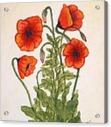 Red Poppies Watercolor Painting Acrylic Print