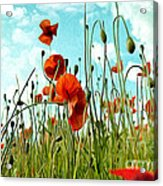 Red Poppy Flowers 03 Acrylic Print