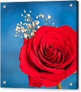 Red Rose And Baby Breath Acrylic Print