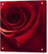 Red Rose Close Up Acrylic Print