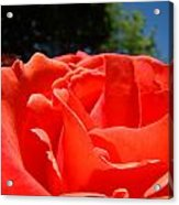 Red Rose Flower Bright Colorful Vivid Red Floral Rose Acrylic Print