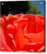 Red Rose Flower Fine Art Prints Roses Garden Acrylic Print