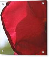Red Rose Petal Acrylic Print