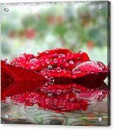 Red Rose Reflections Acrylic Print
