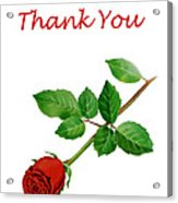 Red Rose Thank You Card Acrylic Print