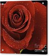 Red Rose With Water Drops Acrylic Print