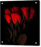 Red Roses 1 Acrylic Print