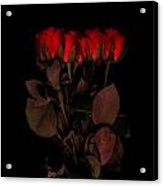 Red Roses 3 Acrylic Print