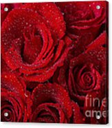 Red Roses And Water Drops Acrylic Print