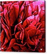 Red Ruffles Acrylic Print