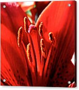 Red Rules Acrylic Print