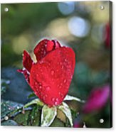 Red Saturated Acrylic Print