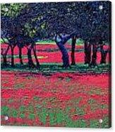 Red Shock Acrylic Print