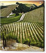 Red Soles Vineyard Acrylic Print