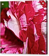 Red Speckled Rose Acrylic Print
