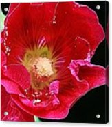 Red Tango Acrylic Print