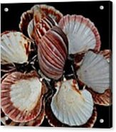 Red-toned Seashells Acrylic Print