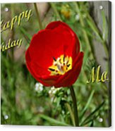Red Tulip Birthday Acrylic Print
