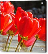 Red Tulip Flowers Art Prints Spring Florals Acrylic Print