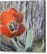 Red Tulip Acrylic Print