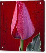 Red Tulip With Dew Acrylic Print