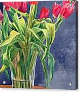 Red Tulips Acrylic Print by Peter Sit