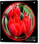 Red Tulips Under Glass Acrylic Print