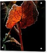 Red Wing Acrylic Print