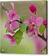 Redbud Branch Acrylic Print
