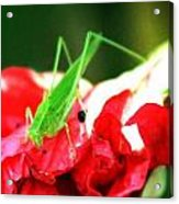 Reds And Green Acrylic Print