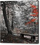 Reds In The Woods Acrylic Print