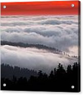 Redwood Clouds Acrylic Print