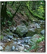Redwood Creek Art Acrylic Print
