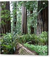 Redwood National Park, California Acrylic Print