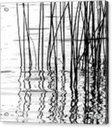Reeds On The Turtle Flambeau Flowage Acrylic Print