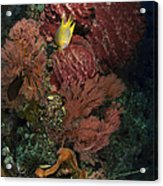 Reef Sponge Coral And Yellow Fish Acrylic Print