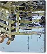 Reflected In A Memory Acrylic Print