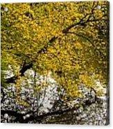 Reflecting Autumn Tree Acrylic Print