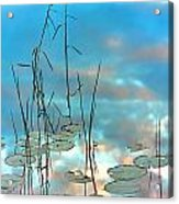 Reflection - Reeds And Pond Lilies Acrylic Print