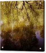 Reflection Acrylic Print by Joana Kruse