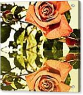 Reflection Of A Warm Rose Acrylic Print