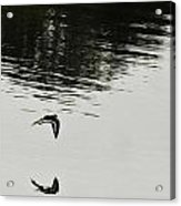 Reflection Of Flight Acrylic Print