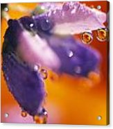 Reflection Of Flower In Dew Drops Acrylic Print