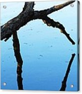 Reflections #1 Acrylic Print