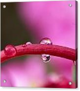 Reflections In Raindrops, Forbidden Acrylic Print by Robert Postma